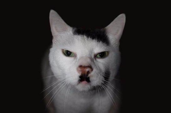 Ученые узнали, почему некоторые коты похожи на немецкого диктатора