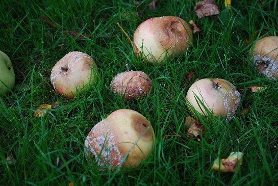 Из испорченных яблок научились делать безопасные батареи
