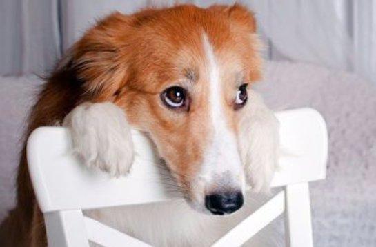 С возрастом собаки становятся мудрее