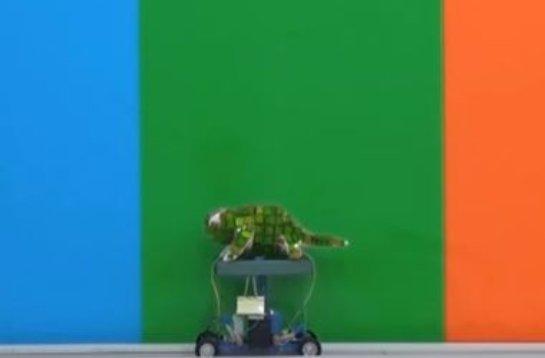 Создан робот-хамелеон, который подстраивается под цвет фона