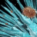 Найдено лекарство от всех видов гриппа
