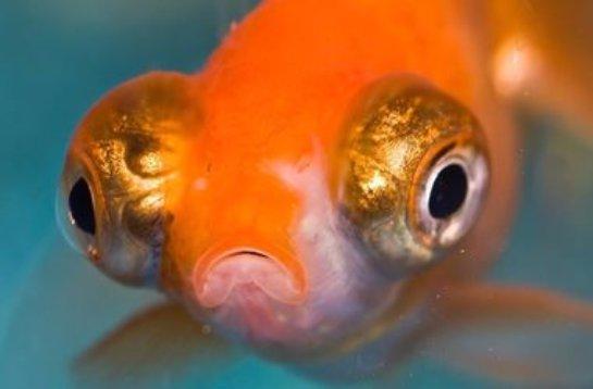 Ученые доказали, что рыбы намного умнее, чем казалось ранее