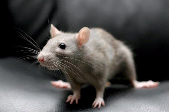 Ученые обнаружили, какие нервные клетки отвечают за риск