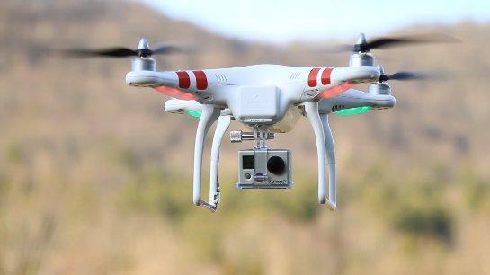 Полеты дронов будут улучшать за счет наблюдения за полетом птиц