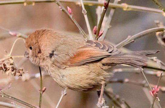 Птичье гнездо остановило строительство метро в Китае