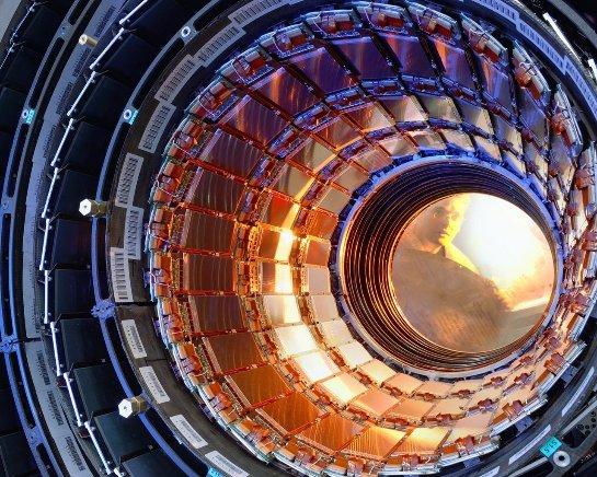 Работа Большого адронного коллайдера была остановлена из-за хорька: животное не выжило