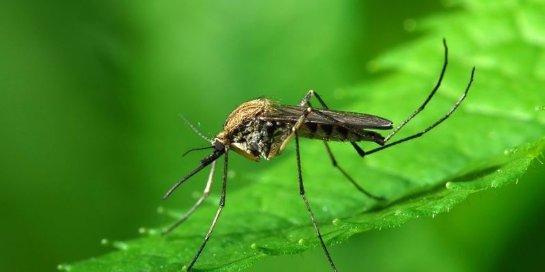 Телевизор от ведущей корейской компании умеет отгонять комаров