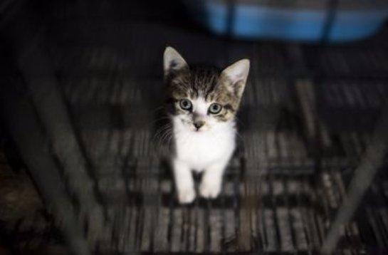 Ученые доказали, что кошки способны влиять на мозг человека