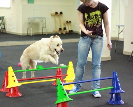 Для львовских собак открыли фитнес – центр под открытым небом