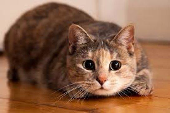 Кошки: любопытные факты о братьях наших меньших