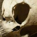 В Дании на раскопках обнаружили череп пришельца