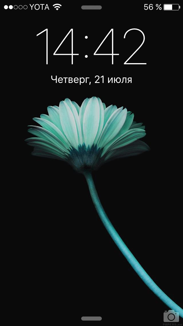 IMG_6694