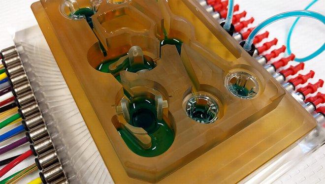 Ученые создали «человека на чипе» — микросистему, имитирующую человеческие органы