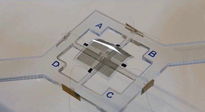 Создан диэлектрический эластомер для искусственных мышц и мягких роботов