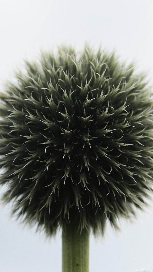 flower-circle-nature-iphone-5