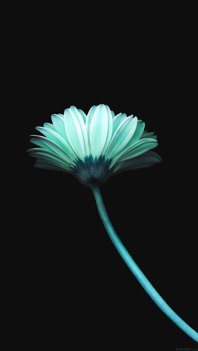 flower-dark-blue-simple-minimal-nature-iphone-5