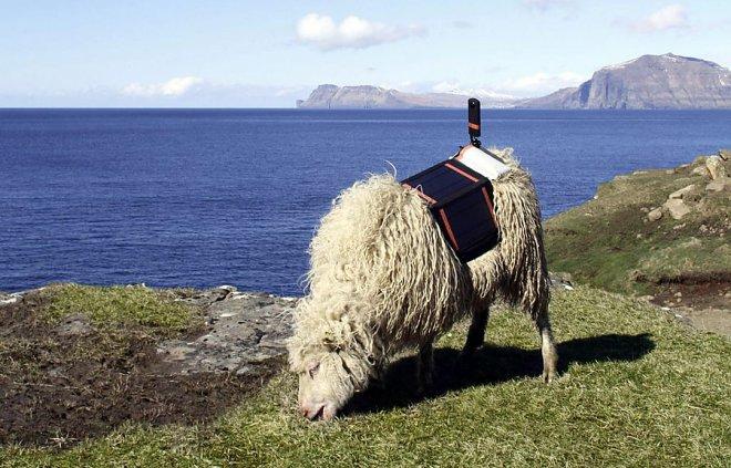Google составит карту Фарерских островов при помощи овец