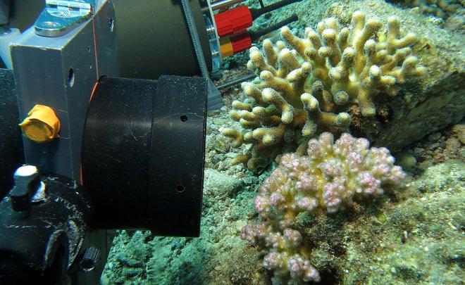 Подводный микроскоп BUM