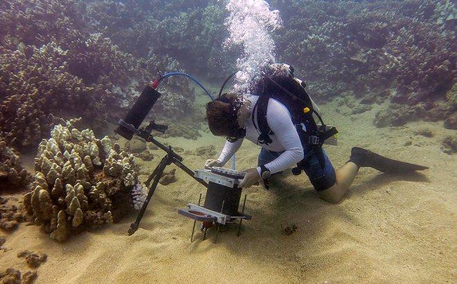 Ученые разработали специальный микроскоп для изучения подводного мира
