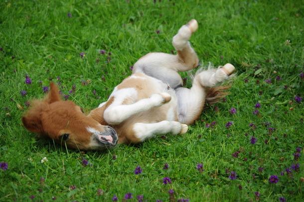 Обнаружен новый форк популярного вредоносного ПО Pony