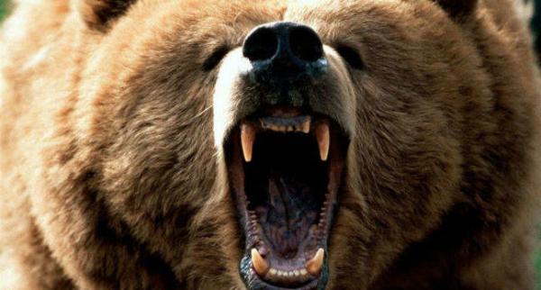 Эксперты обвиняют FANCY BEAR в атаках на журналистов Bellingcat